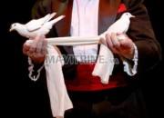 Photo de l'annonce: Le cirque magique  (le Show)