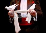 Photo de l'annonce: Le cirque magique