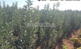 Photo de l'annonce: E-pépinière pour le développement agricole - MAROC