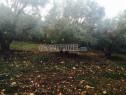 Photo de l'Annonce: Vente de terrain avec titre foncier