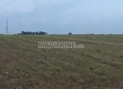 Photo de l'annonce: Un Terrain agricole de 138 hectares à Mohammedia.