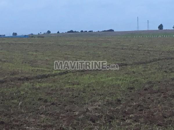 Un Terrain agricole de 138 hectares à Mohammedia.