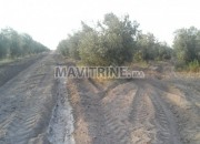 Photo de l'annonce: ارض فلاحية ممتازة للبيع 3 هكتار