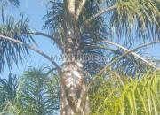 Photo de l'annonce: cocos et bambo