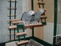 Photo de l'Annonce: Adorable Perroquet