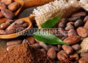 Photo de l'annonce: Commerce du cacao