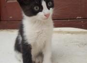 Photo de l'annonce: Chatons femelles