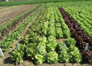Photo de l'annonce: cherchons associé/actionnaire pour le financement d'un projet agricole très rentable.