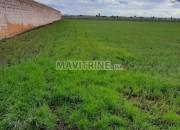 Photo de l'annonce: TERRRAIN AGRICOLE ROUTE GARA