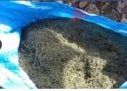 Photo de l'annonce: vend romarin de l'Oriental maroc