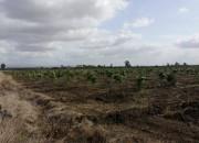Photo de l'annonce: Terrain Agricole 500 ha