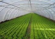 Photo de l'annonce: Cherchons associé financier pour 1 important projet agricole rentable