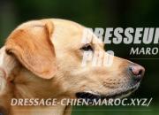 Photo de l'annonce: dressage chien